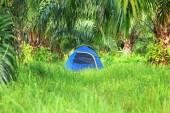 Tourist tent in palm plantation — Stock Photo