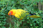 Parrot birds — Stock Photo