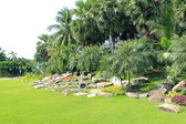 Palm trees view — Stock Photo