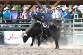 Ty Pozzobon Invitational PBR — Stock Photo