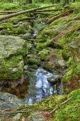 El bosque primitivo con el arroyo - hdr — Foto de Stock