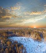 Solnedgång i djupa skogen — Stockfoto