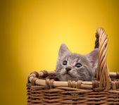 маленький котенок — Стоковое фото