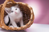 Little kitten in the basket — Stock Photo