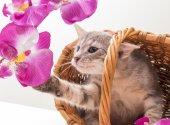Weinig grappige kitten — Stockfoto