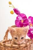 Little funny kitten — Stock Photo