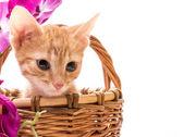 Gracioso gatito — Foto de Stock