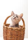 Gattino divertente — Foto Stock