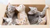 Funny little kittens in a box — Стоковое фото