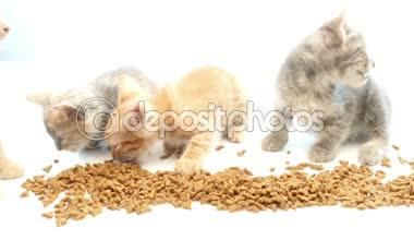 Kat eten van droog kattenvoer — Stockvideo