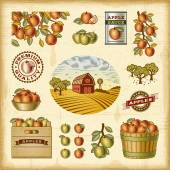 Vintage colorful apple harvest set — Stock Vector