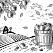Apple harvest landscape black and white — Vector de stock  #63420601