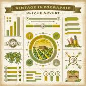 Vintage olive harvest infographic set — Stock Vector