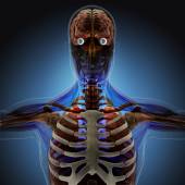 The human body by X-rays on blue background. — Stock Photo