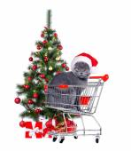 Cat in a  shopping trolley — Stock Photo