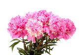 Boeket van roze pioenrozen — Stockfoto