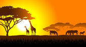 African savanna an evening landscape — Vettoriale Stock