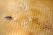 Pracy pszczół plaster miodu. — Zdjęcie stockowe