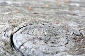 Bark of tree texture — Stock Photo