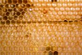 Honeycomb background — Foto de Stock