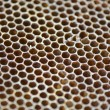 Honey bee honeycomb, close up, texture — Stock Photo #54841693