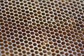 мед пчелы сотовый, крупным планом, текстуры — Стоковое фото