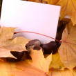 Background with paper sheet and autumn leaves — Stock Photo #56034693