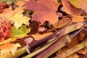 秋天的落叶与板栗垃圾背景 — 图库照片