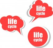 Life cycle. Set of stickers, labels, tags. Template for infographics — Stock Photo