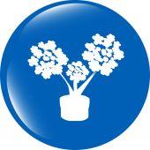 Bloemen pictogram knop app web geïsoleerd op witte achtergrond — Stockfoto