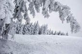 Snow-covered trees on a ski resort — Stock Photo
