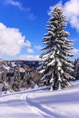 Snowy tree on ski resort in Carpathian Mountains — Stock Photo