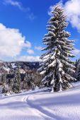 Snowy tree on ski resort in Carpathian Mountains — Stock Photo