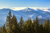 Forest, mountains, sky and fog of Carpathians — Stock Photo