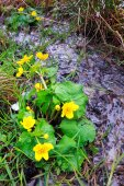 Yellow spring flowers and creek — Foto Stock