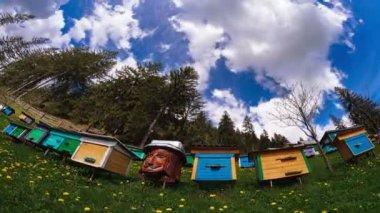 Beekeeping in Ukrainian Carpathians. 4K Time Lapse. — Stock Video
