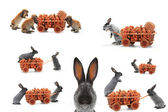 Gray rabbits with  carrots — Stock Photo