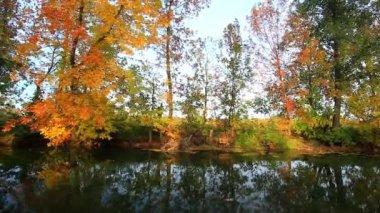 Golden Autumn on the lake — Stock Video