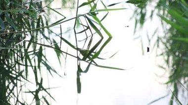 Singing of birds, croaking of frogs — Stock Video