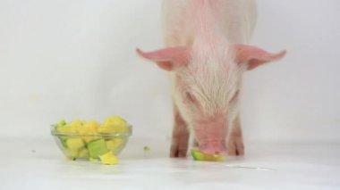 Pig eats pumpkin — Vídeo de Stock