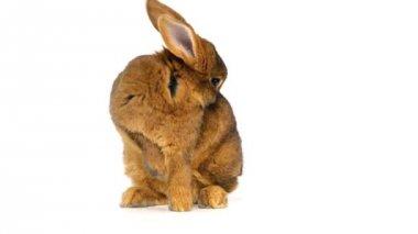 Mignon lapin moelleux — Vidéo