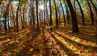 Autumn wood with sun rays — 图库视频影像