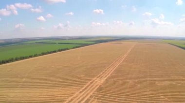 Aerial field of wheat — Stock Video