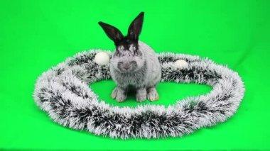New Year's Fluffy rabbit — Stock Video