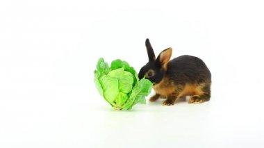 Coniglio mangia cavolo — Video Stock