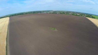 Panorama of wheat field — Stock Video