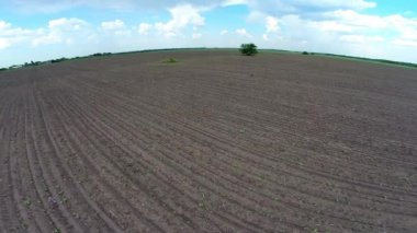 Aerial view of plowed field and tree — Stock Video