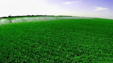 産業農場で灌漑システム — ストックビデオ