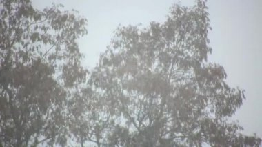 Falling snow in winter — Stock Video