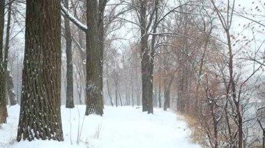 Snow in winter wood — Stock Video